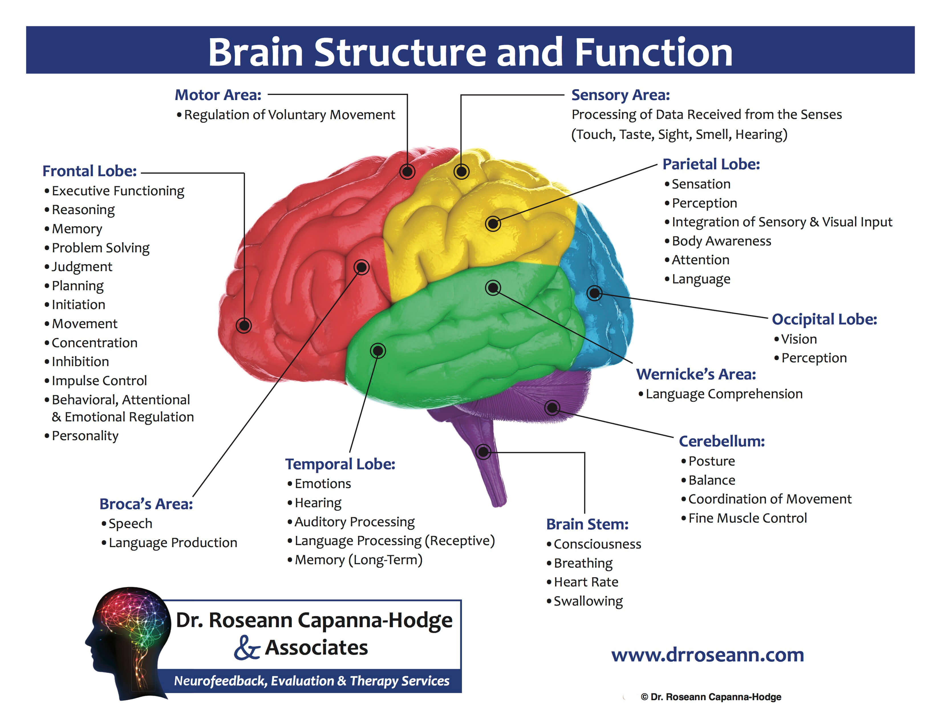 Neurofeedback treatment - Brain Diagram